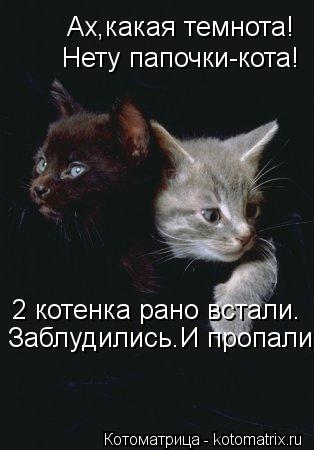 Котоматрица: Ах,какая темнота! Нету папочки-кота! 2 котенка рано встали. Заблудились.И пропали.