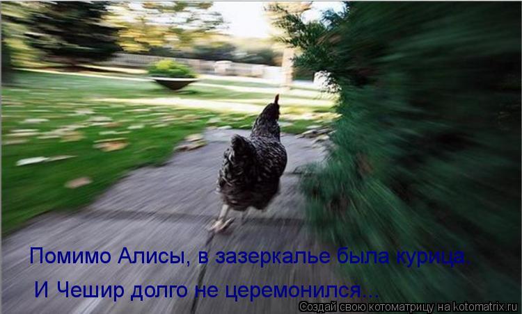 Котоматрица: Помимо Алисы, в зазеркалье была курица. И Чешир долго не церемонился...