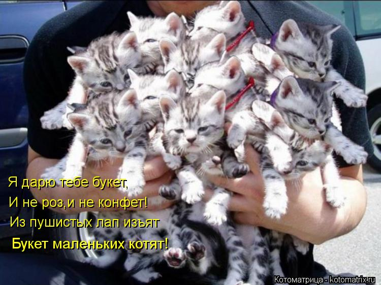 Котоматрица: Я дарю тебе букет, И не роз,и не конфет! Из пушистых лап изъят Букет маленьких котят!
