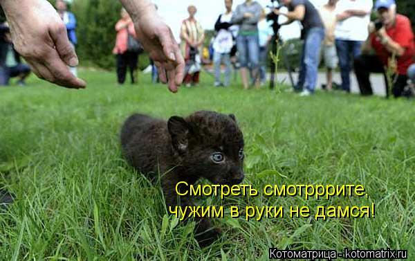 Котоматрица: Смотреть смотрррите,  чужим в руки не дамся!