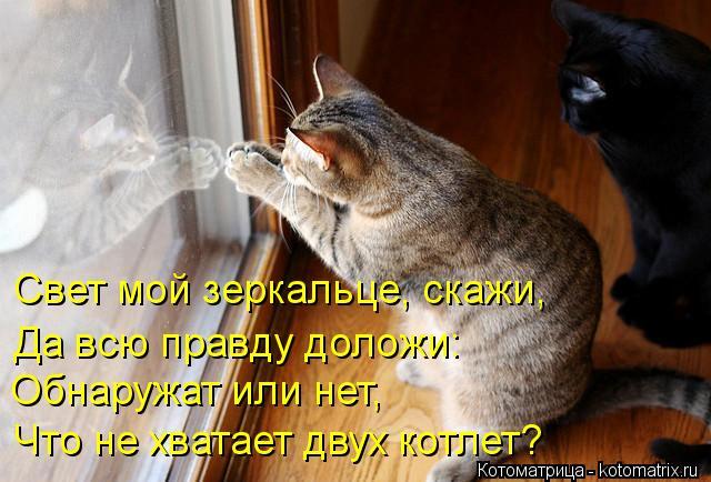 Котоматрица: Обнаружат или нет, Свет мой зеркальце, скажи, Да всю правду доложи: Что не хватает двух котлет?