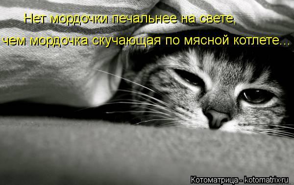 Котоматрица: Нет мордочки печальнее на свете, чем мордочка скучающая по мясной котлете...