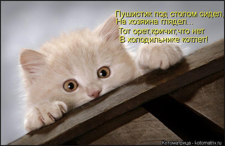 Котоматрица: Пушистик под столом сидел, На хозяина глядел... Тот орет,кричит,что нет В холодильнике котлет!