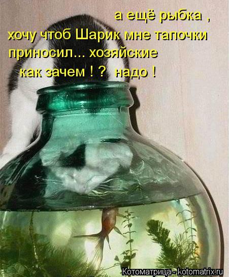 Котоматрица: а ещё рыбка ,  хочу чтоб Шарик мне тапочки  приносил... хозяйские  как зачем ! ?  надо !