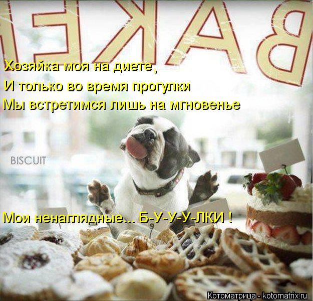 Котоматрица: Хозяйка моя на диете  И только во время прогулки Мы встретимся лишь на мгновенье , Мои ненаглядные... Б-У-У-У-ЛКИ !