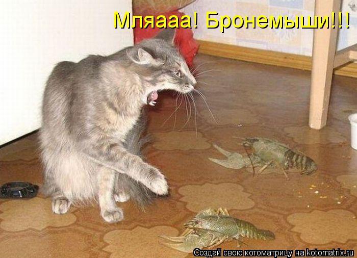 Котоматрица: Мляааа! Бронемыши!!!