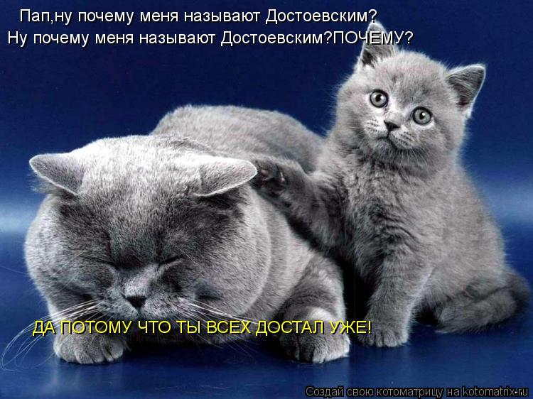 Котоматрица: Пап,ну почему меня называют Достоевским? Ну почему меня называют Достоевским?ПОЧЕМУ? ДА ПОТОМУ ЧТО ТЫ ВСЕХ ДОСТАЛ УЖЕ!