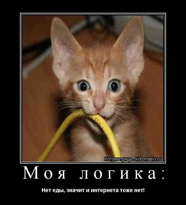 Котоматрица: Моя логика: Нет еды, значит и интернета тоже нет!