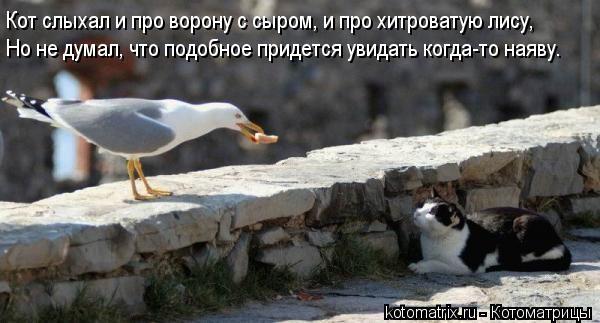 Котоматрица: Кот слыхал и про ворону с сыром, и про хитроватую лису, Но не думал, что подобное придется увидать когда-то наяву.