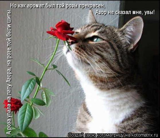 Котоматрица: А роза упала на лапу Азора, на розе той были шипы. Но как аромат был той розы прекрасен, Азор не сказал мне, увы!