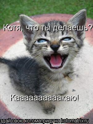 Котоматрица: Каааааааааакаю! Котя, что ты делаешь?