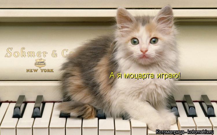 Котоматрица: А я моцарта играю!