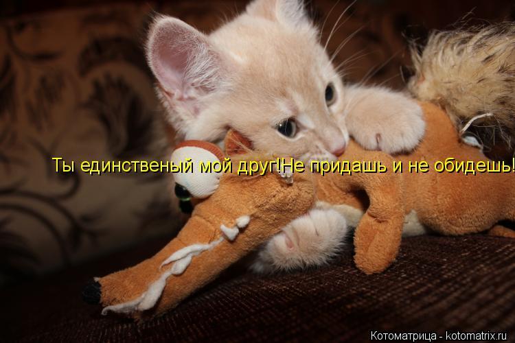 Котоматрица: Ты единственый мой друг!Не придашь и не обидешь!