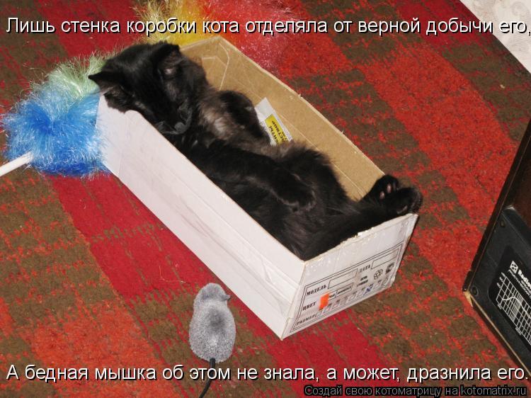 Котоматрица: Лишь стенка коробки кота отделяла от верной добычи его, А бедная мышка об этом не знала, а может, дразнила его.