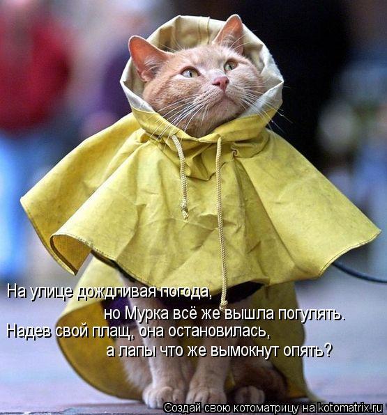 Котоматрица: На улице дождливая погода,  но Мурка всё же вышла погулять. Надев свой плащ, она остановилась, а лапы что же вымокнут опять?