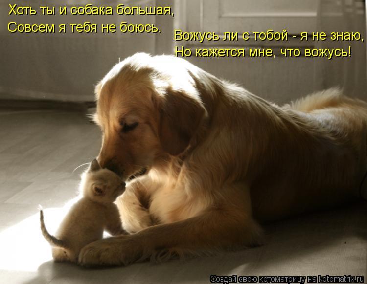 Котоматрица: Хоть ты и собака большая, Совсем я тебя не боюсь. Вожусь ли с тобой - я не знаю, Но кажется мне, что вожусь!