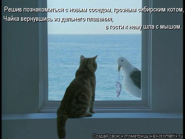 Котоматрица: Решив познакомиться с новым соседом, грозным сибирским котом, Чайка вернувшись из дальнего плавания,  в гости к нему шла с мышом.  в гости к н