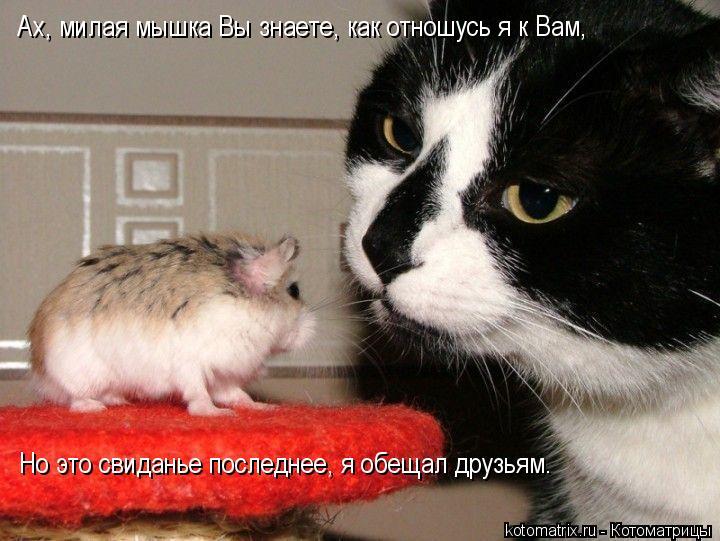 Котоматрица: Ах, милая мышка Вы знаете, как отношусь я к Вам, Но это свиданье последнее, я обещал друзьям.