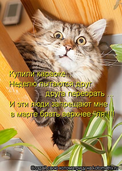 """Котоматрица: Купили караоке...  Неделю пытаются друг друга переорать ... И эти люди запрещают мне в марте брать верхнее """"ля""""!!!"""