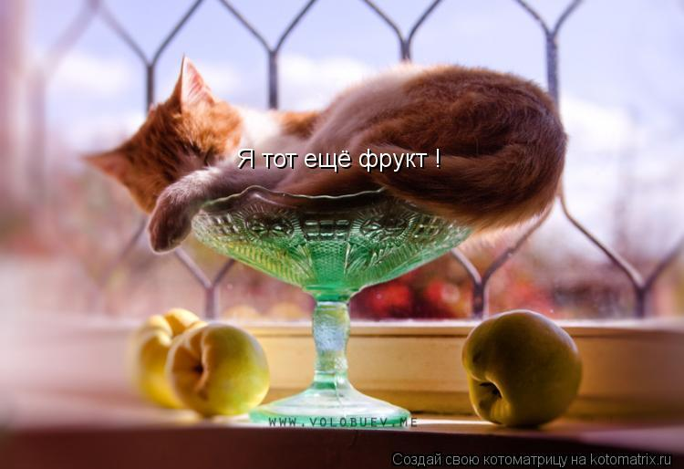 Котоматрица: Я тот ещё фрукт !