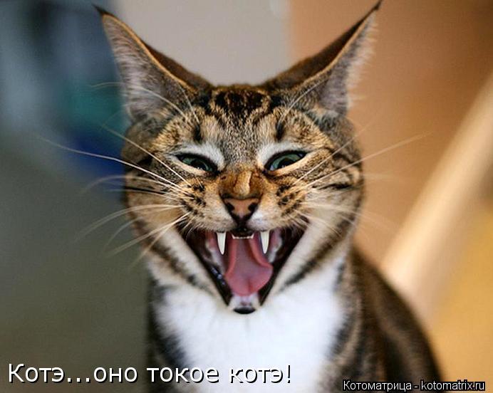 Котоматрица: Котэ...оно токое котэ!