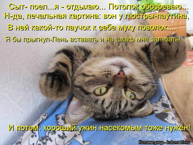 Котоматрица: Сыт- поел...я - отдыхаю... Потолок обозреваю... Н-да, печальная картина: вон у люстры-паутина, В ней какой-то паучок к себе муху поволок.... Я бы пры