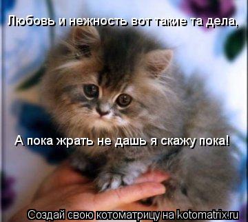 Котоматрица: Любовь и нежность вот такие та дела,  А пока жрать не дашь я скажу пока!