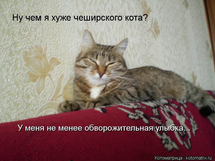Котоматрица: Ну чем я хуже чеширского кота? У меня не менее обворожительная улыбка...