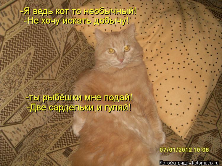Котоматрица: -Я ведь кот то необычный! -Не хочу искать добычу! -ты рыбёшки мне подай! -Две сардельки,и гуляй!