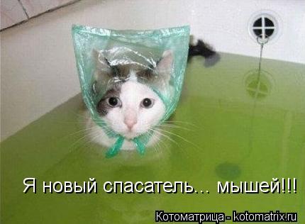 Котоматрица: Я новый спасатель... мышей!!!