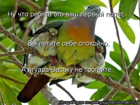 Котоматрица: Ну что ребята это ваш первый полёт, Вы летите себе спокойно, А ягуара-Ваську не трогайте.