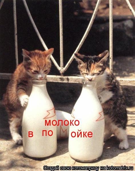 Котоматрица: по ойке в молоко