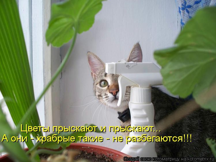 Котоматрица: Цветы прыскают и прыскают... А они - храбрые такие - не разбегаются!!!