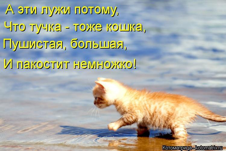 Котоматрица: А эти лужи потому, Что тучка - тоже кошка, Пушистая, большая, И пакостит немножко!