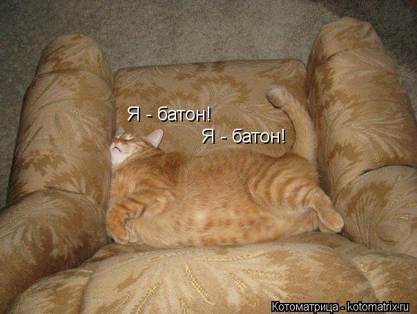 Котоматрица: Я - батон! Я - батон!
