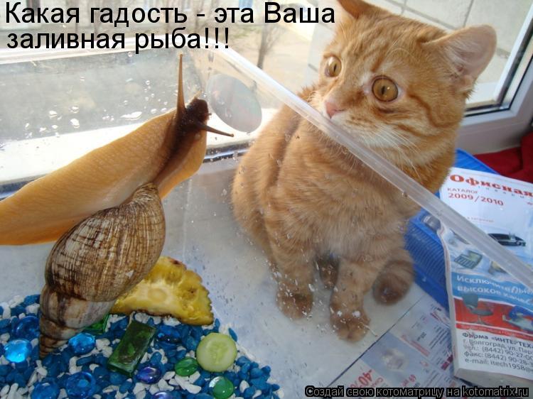 Котоматрица: Какая гадость - эта Ваша заливная рыба!!!