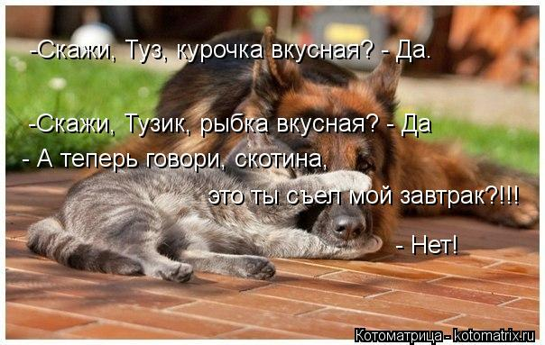 Котоматрица: -Скажи, Тузик, рыбка вкусная? - Да -Скажи, Туз, курочка вкусная? - Да. - А теперь говори, скотина,   это ты съел мой завтрак?!!!  - Нет!
