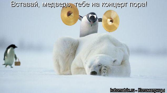 Котоматрица: Вставай, медведь, тебе на концерт пора!