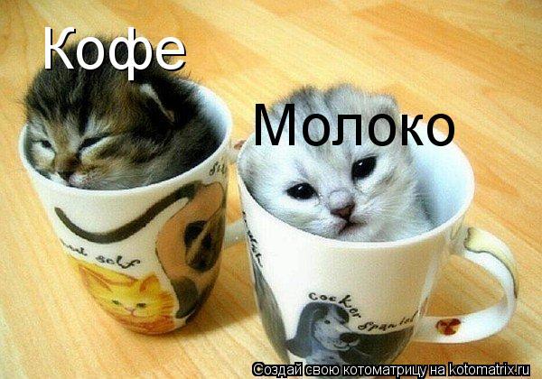 Котоматрица: Кофе Молоко