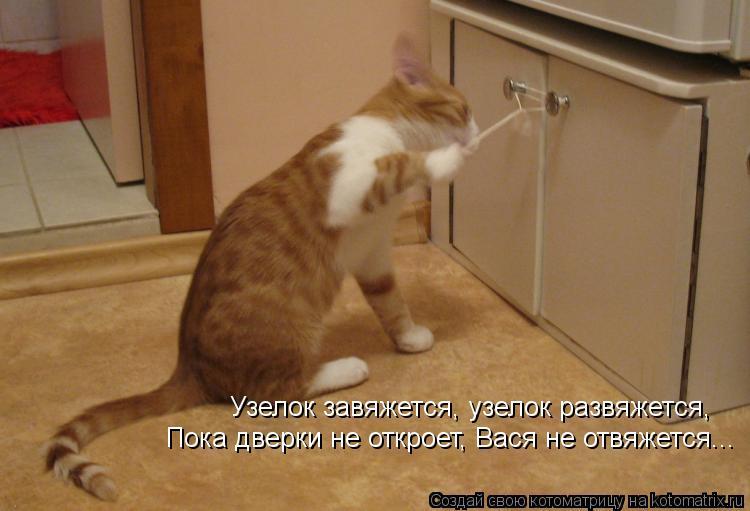 Котоматрица: Узелок завяжется, узелок развяжется, Пока дверки не откроет, Вася не отвяжется...