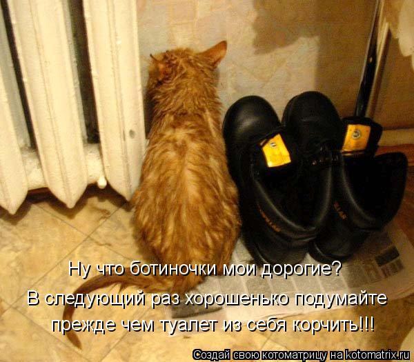 Котоматрица: Ну что ботиночки мои дорогие? В следующий раз хорошенько подумайте прежде чем туалет из себя корчить!!!