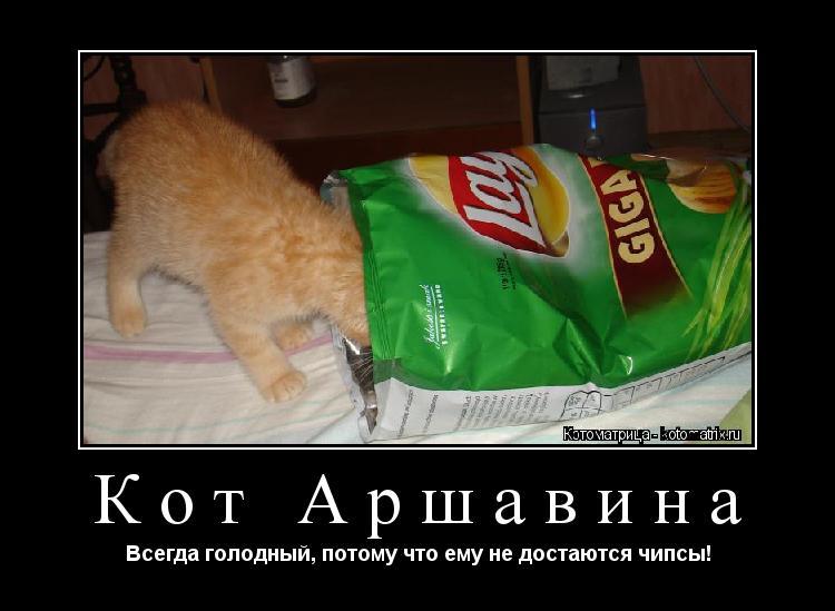 Котоматрица: Кот Аршавина Всегда голодный, потому что ему не достаются чипсы!
