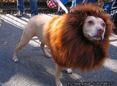 Котоматрица: я лев свирепый нуи выридили меня