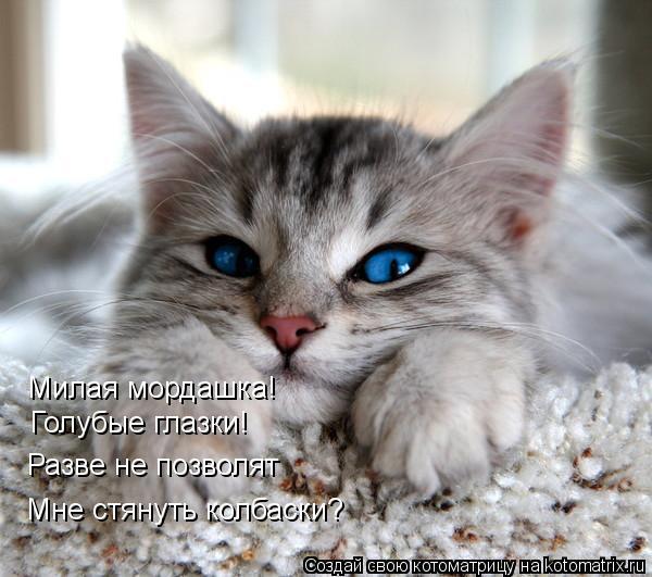 Котоматрица: Милая мордашка! Голубые глазки! Разве не позволят Мне стянуть колбаски?