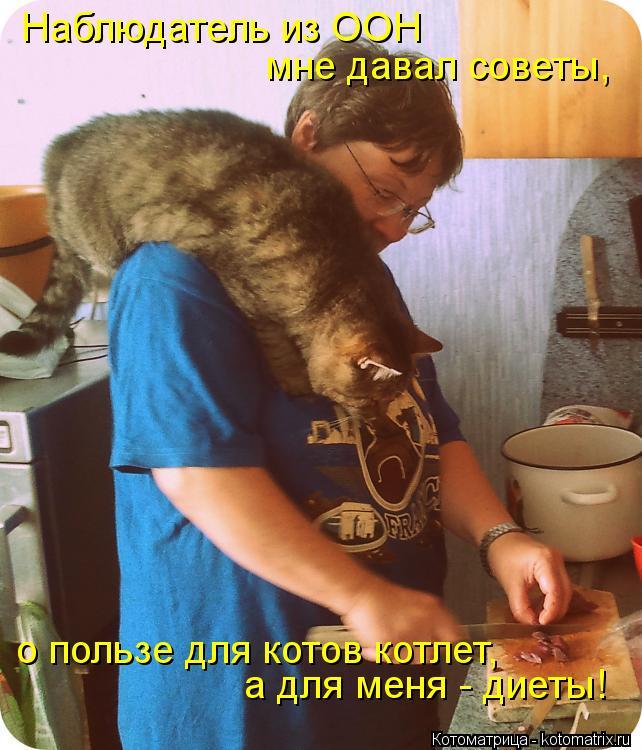 Котоматрица: Наблюдатель из ООН мне давал советы, о пользе для котов котлет, а для меня - диеты!