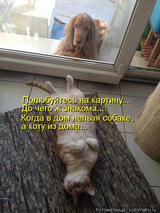 Котоматрица: Полюбуйтесь на картину... Когда в дом нельзя собаке, а коту из дома... До чего ж знакома...: