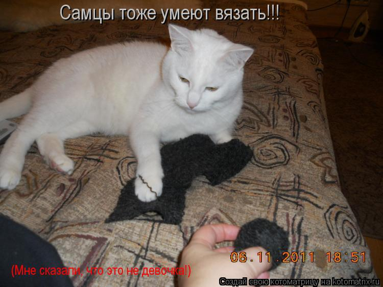 Котоматрица: Самцы тоже умеют вязать!!! (Мне сказали, что это не девочка!)
