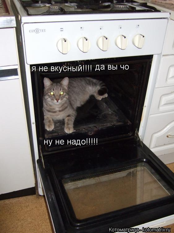 Котоматрица: я не вкусный!!!! да вы чо ну не надо!!!!!