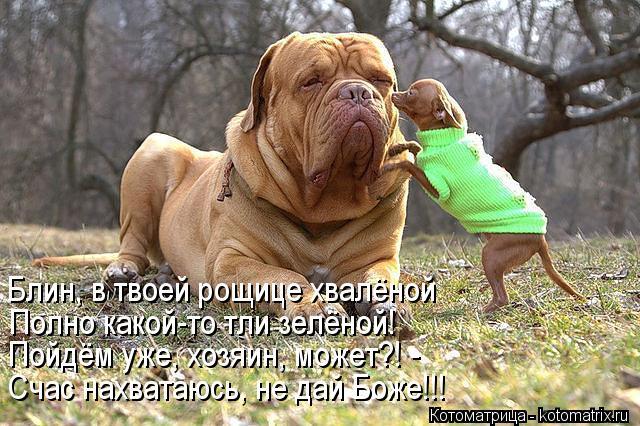 Котоматрица: Блин, в твоей рощице хвалёной Полно какой-то тли зелёной! Пойдём уже, хозяин, может?! - Счас нахватаюсь, не дай Боже!!!