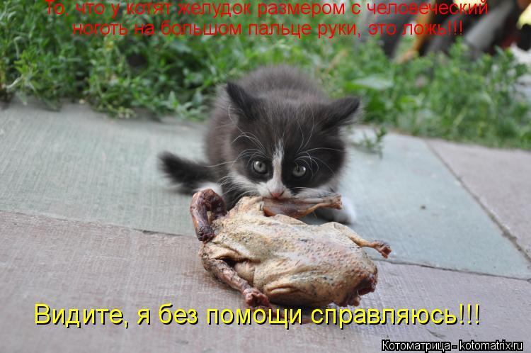 Котоматрица: То, что у котят желудок размером с человеческий ноготь на большом пальце руки, это ложь!!! Видите, я без помощи справляюсь!!!